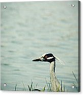 The Night Heron Acrylic Print