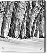 The Noreaster Bw Acrylic Print