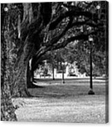 The Oaks Of Audubon Park Acrylic Print