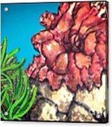 The Odd Couple Two Very Different Sea Anemones Cohabitat Acrylic Print