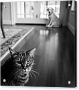 The Old Cat And The New Puppy Acrylic Print by Diane Diederich