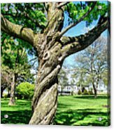 The Old Lady Of The Green Acrylic Print by Michelle Calkins