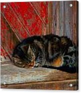 The Old Mill Cat Acrylic Print