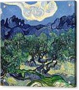 The Olive Trees Acrylic Print