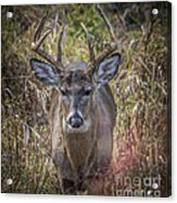 The One You Look For Acrylic Print