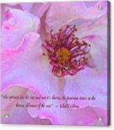 The Optimist Sees The Rose Acrylic Print