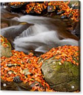 The Orange Stream Acrylic Print
