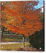 The Orange Tree Acrylic Print