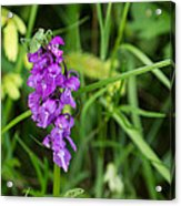 The Orchid And The Grasshopper  Acrylic Print