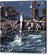 The Original Shamu Orca Sea World San Diego 1967 Acrylic Print