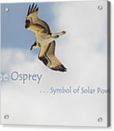 The Osprey Acrylic Print