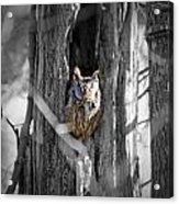 The Owl Acrylic Print
