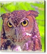 The Owl... Acrylic Print
