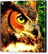 The Owl's Eye Acrylic Print