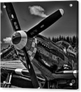 The P-51 Speedball Alice Mustang Acrylic Print by David Patterson