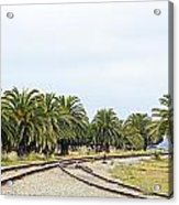 The Palms By The Tracks Acrylic Print