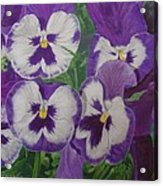 The Pansy Brothers Acrylic Print