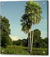 The Pantanal Acrylic Print