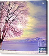 The Pastel Dreams Of Winter Acrylic Print