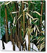 The Patience Of Bamboo Acrylic Print