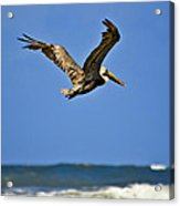 The Pelican And The Sea Acrylic Print