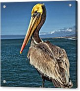 The Pelican Of Oceanside Pier Acrylic Print