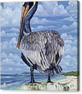 The Pelican Perch Acrylic Print