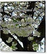 The Perfumed Cherry Tree 2 Acrylic Print