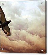 The Pigeon Acrylic Print