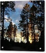 The Pines At Sunset Acrylic Print