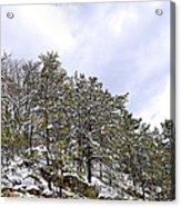 The Pines Acrylic Print