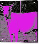 the Pink Cow Acrylic Print