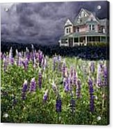 The Pink House In The Lupine Acrylic Print