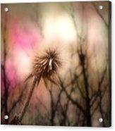 The Pink Light Acrylic Print