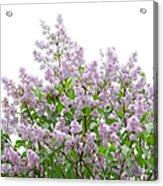 The Pink Of Spring - Featured 2 Acrylic Print