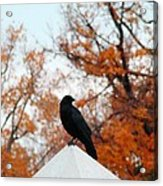 Crow Found The Perfect Pyramid Point Acrylic Print