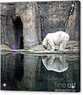 The Polar Bear And The Purple Chair Acrylic Print