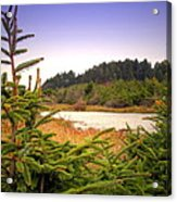 The Pond In The Forest Acrylic Print