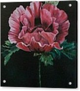 The Poppy Acrylic Print