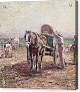 The Potato Pickers Acrylic Print by Harry Fidler