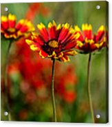 The Power Of Three Acrylic Print