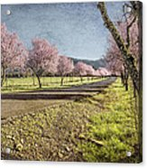 The Promise That Spring Makes Acrylic Print