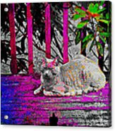 The Psychedelic Cat Acrylic Print