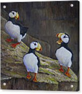 The Puffin Report Acrylic Print
