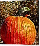 The Pumpkin Acrylic Print