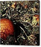 The Pumpkin Patch Acrylic Print