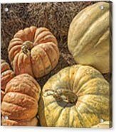 The Pumpkins Of Autumn Acrylic Print