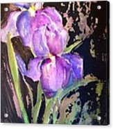 The Purple Iris Acrylic Print