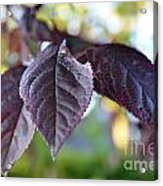 The Purple Leaf Acrylic Print by Aqil Jannaty