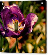 The Purple Rose Of Cairo Acrylic Print